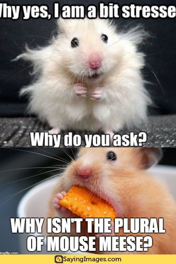 20 Mouse Memes You Ll Find Adorable Sayingimages Com Pinterest Humor Memes Image Quotes