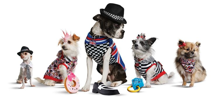 Gwen Stefani now dresses dogs in Harajuku Lovers style at Petco?! http://www.missfashionnews.com/2015/11/09/harajuku-lovers-for-pets/