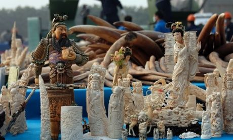 OPEN LETTER TO CHINESE PRESIDENT CALLS FOR END TO IVORY TRADE