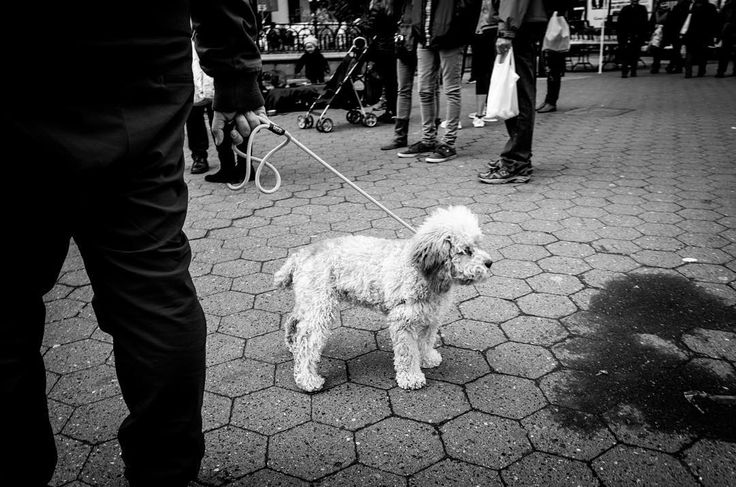 Frase m a dog perspective ------- #dog #perspective #unionsquare #streetphotography #streetfauna #StreetLife_Award #streetphotographers #streetphotography #streetlife #best_streetview #streetshots #lensculture #lensculturestreet #street_photo_club #weekly_feature #helloicp #exkclusive_shot #watchthisinstagood #viewbugfeature #bnw_awards #bw_awards #bnw_planet #bnwmood #newyork_ig ------- #fujifilm #fujifilm_xseries #ricohgr #eyeem #vcso #manhattan #nyc by streetfauna