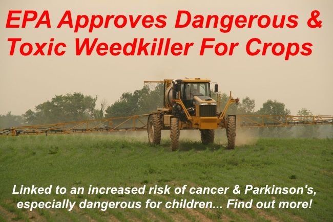 So if it isn't bad enough that most of our corn, corn products and soya products are genetically engineered, the EPA ( which ironically stands for Environmental Protection Agency!) has now approved the use of 2,4-D which is an aggressive weedkiller that...