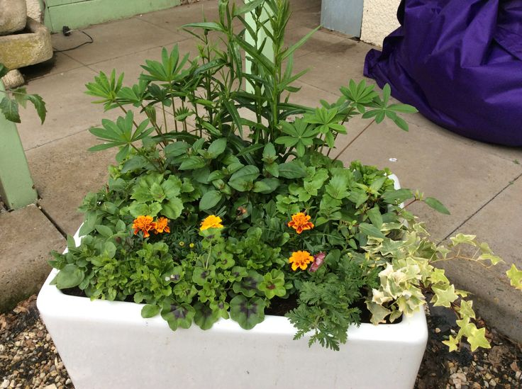 1000 Images About My Belfast Sink Planter On Pinterest