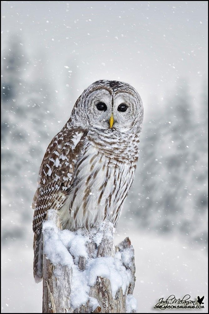 Owl 57 Best 25+ Owl pictures ...