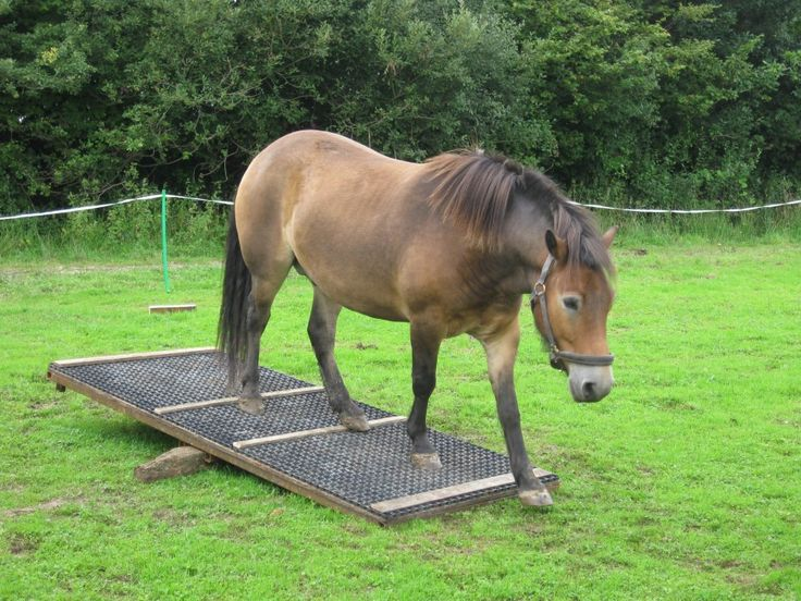 1000+ Images About Horse Obstacle Course On Pinterest