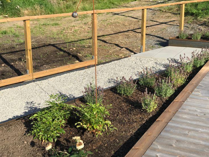 Del av rabatten har blivit planterad med lavendel och vit astilbe.
