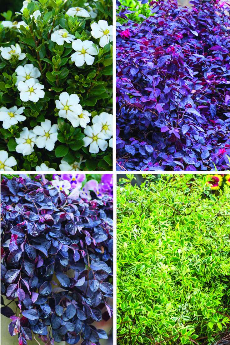 Twelve Months Of Color With Southern Living Plant Collection