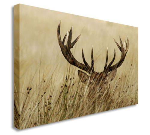 Deer Hiding In The Fields Antlers Wall Picture Canvas Prints Art Cheap