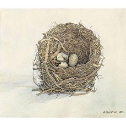 Merelnest, 1981 – olieverf op linnen, 23 x 29 In een ijzeren potje op drie pootjes lag dit nest achterin het hok. Het raampje had altijd opengestaan en een merel vond het een veilige plek. Toen ging de man naar het rusthuis en het hok werd afgesloten. De vogel buiten, de eitjes binnen. Ik vond dit kleine drama toen ik wat oude rommel op kwam halen: Nou heeft die vogel zijn nest voor niets gebouwd, tenzij ik het schilder, dacht ik.
