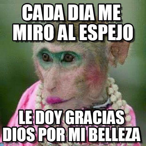 Cada Dia Me Miro Al Espejo - Mono meme en Memegen                                                                                                                                                                                 Más