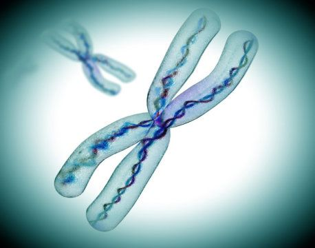Scientists discover why X chromosome lacks 'housekeeping genes'