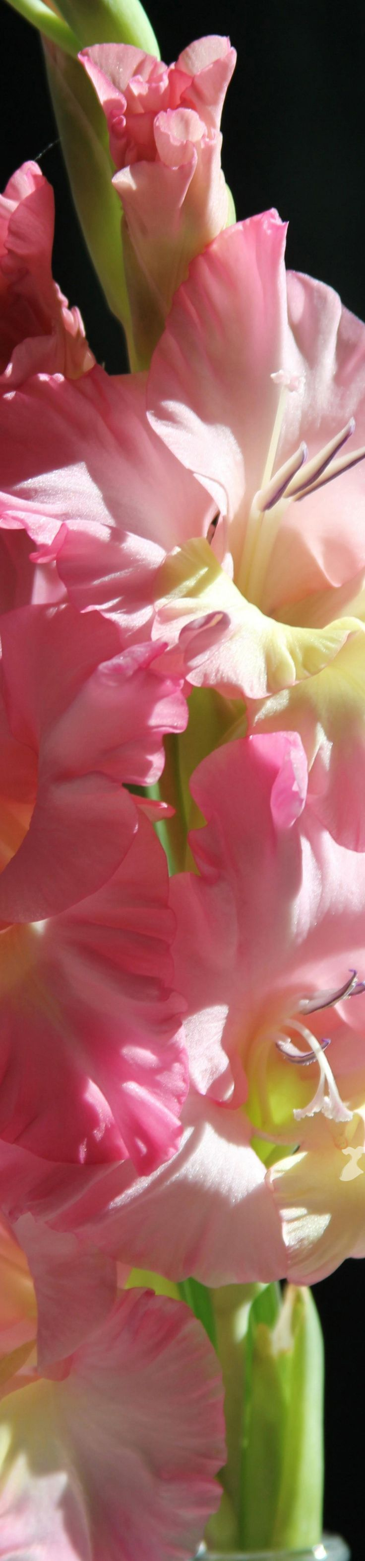 102 best flower favourites images on Pinterest | Beautiful flowers ...