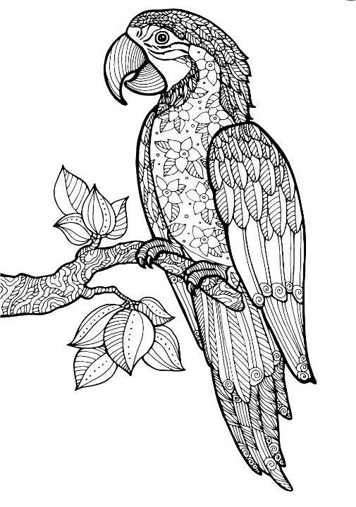 Pin by Barbara on coloring parrot Pinterest