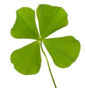 The Four Leaf Clover    One of the most universally known symbols for good luck is the four-leaf clover. Legends surrounding this good luck token date to the beginning of mankind itself. It is said that Eve took a four leaf clover from the Garden of Eden as a remembrance of her time in Paradise.
