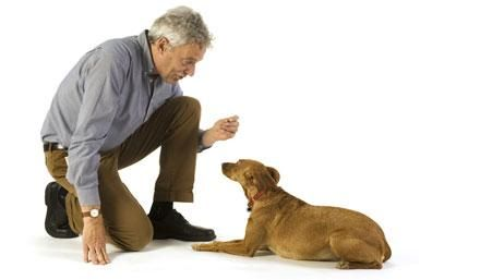 This is one of my favourite resources for behavioural tips and aids.  Excellent articles for crate-training, cleaning up urine, separation anxiety, clicker training, etc.  Visit and look through them all!