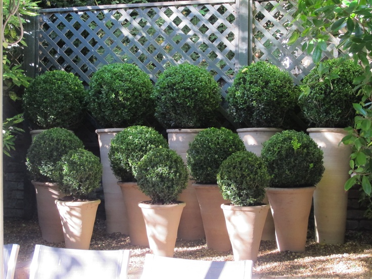 232 best A TOPIARY NURSERY images on Pinterest Topiaries