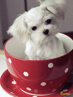 Ver imagen de tierno perrito en taza roja con movimiento