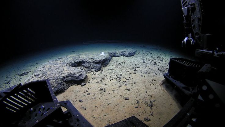 Deep-Diving Robot Discovers Mysterious and Adorable Octopus Species