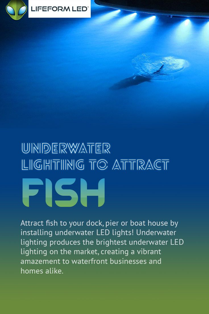 Underwater LED Lighting to Attract Fish - Attract fish to your dock, pier or boat house by installing underwater LED lights! Underwater lighting produces the brightest underwater LED lighting on the market, creating a vibrant amazing lit up dock for a waterfront businesses or homes alike.