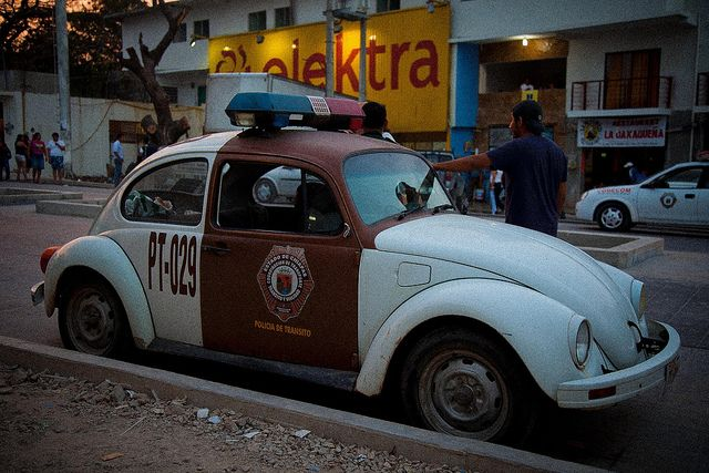 Mexican Beetle | Recent Photos The Commons Getty Collection Galleries World Map App ...