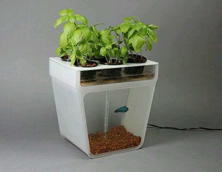 Self contained water garden fish tank set up your fish for Water garden fish tank