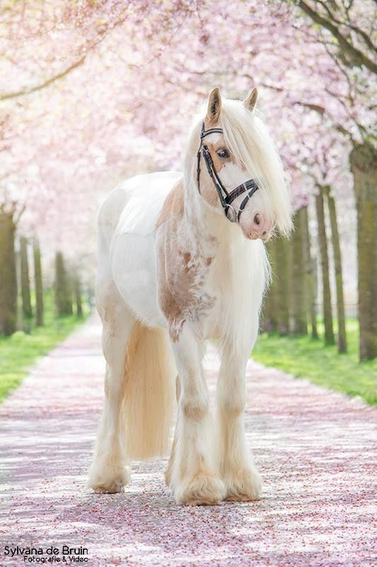 Es sieht so süß aus. Wenn es keine Pferde mit Horn gibt, dann ist das auf jeden Fall ein Einhorn.