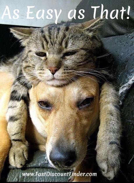 fastdiscountfinder.com | As easy as that! | #cat #dag #catondog #catanddog http://fastdiscountfinder.com