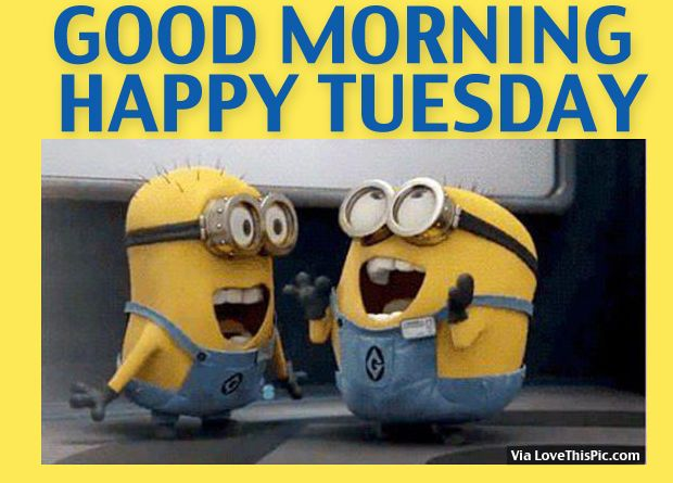 Good Morning, Happy Tuesday good morning tuesday tuesday quotes good morning quotes happy tuesday good morning tuesday quotes happy tuesday morning tuesday morning facebook quotes tuesday image quotes happy tuesday good morning tuesday minion quotes