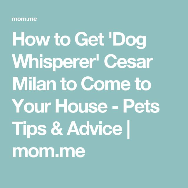 How to Get 'Dog Whisperer' Cesar Milan to Come to Your House - Pets Tips & Advice | mom.me