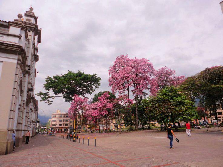Ibague Tolima, Ciudad Musical De Colombia