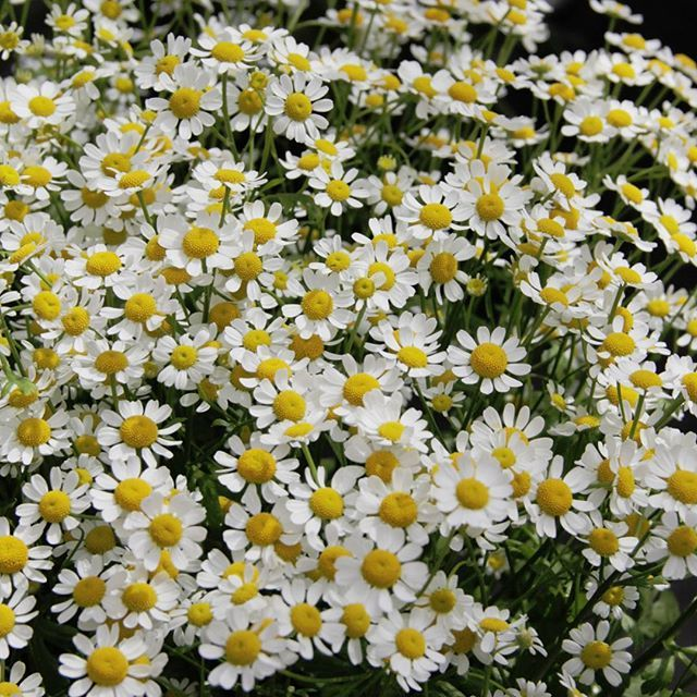 Kesä, kesä, kesä…#kesä#flör#flör2017#florkukkajapuutarha#kukkajapuutarhaflör#kukka#puutarha#turku#love_turku#kissmyturku#flowerstagram#flowerinspo#kukkakauppa#natureinspires#natureinspired