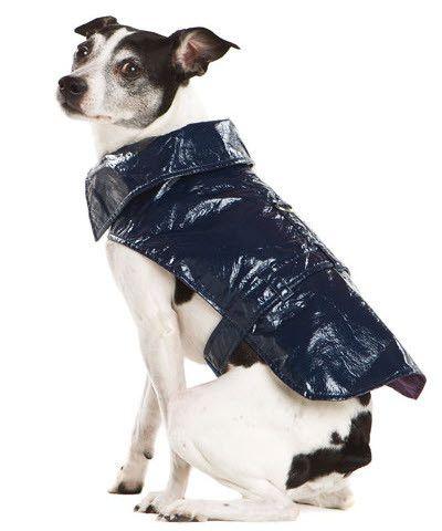 Blue Dog Raincoat with Large Stylish Collar- Dog's Stylish Raincoat