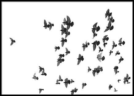 Birds, poster in der Gruppe Poster / Schwarz-Weiß bei Desenio AB (8419)
