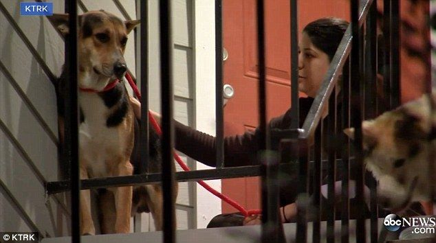 Kind act: Neighbors left food and water for the loyal German Shepard who refused to budge until Good Samaritan Maranda Perez (pictured right) managed to persuade the dog to come with her