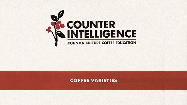 Coffee Varieties by Counter Culture Coffee- to view when finals have me swamped