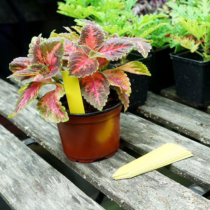 Plantetiketter 20-pack, gula #Plantetiketter #Växtetiketter