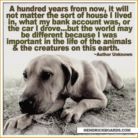 Pin By Theresa On Humane Animals Dogs Animal Quotes