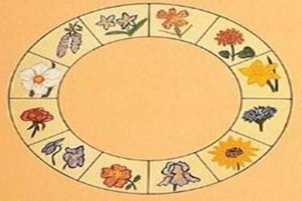 Gyógynövény horoszkóp - neked melyiket kellene rendszeresen fogyasztanod?