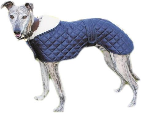 wide dog collars for greyhounds | The Greyhound Anorak