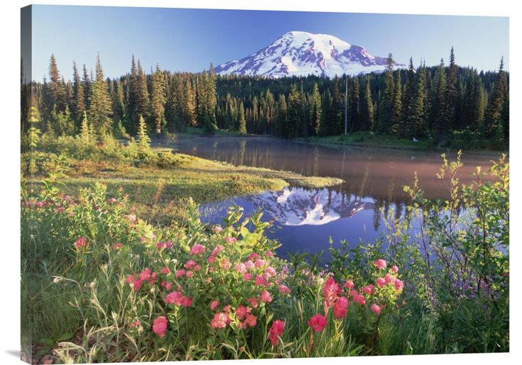 Mt Rainier and Wildflowers at Reflection Lake, Mt Rainier National Park, Washington