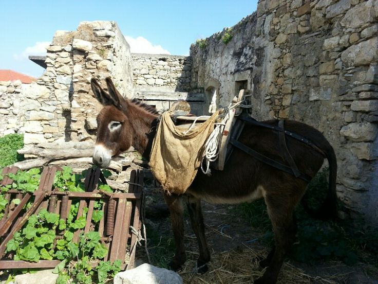 A other donkey during this great project