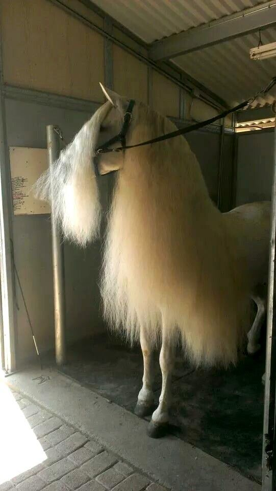 Beautiful horse mane