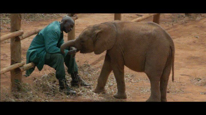 A keeper at the David Sheldrick Wildlife Trust spends some quiet time with one of the baby elephants