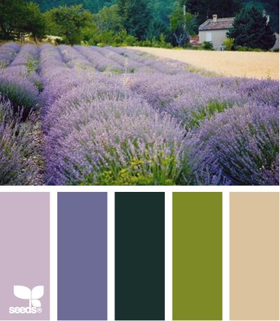 lavender field, love the color scheme, this website is awesome!: Design Seeds, Colors Combinations, Colors Palettes, Lavender Fields Paintings, Colors Schemes, Paintings Palettes, Colour Palettes, Paintings Colour, Rustic Wedding