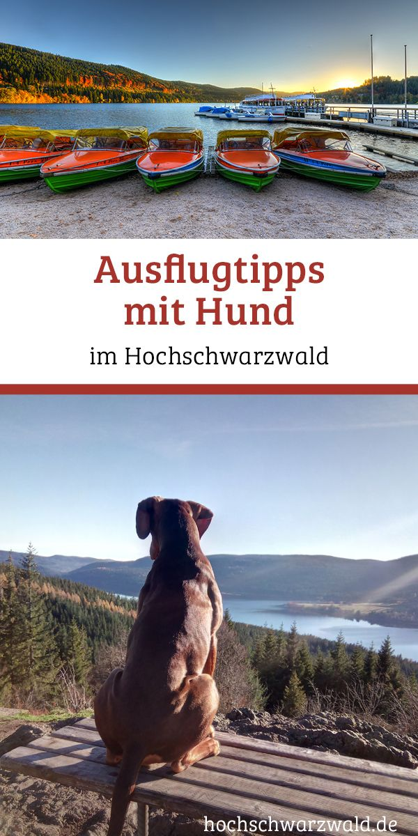 Ausflug Mit Hund Im Schwarzwald Die Besten Ausflugsziele Ausflug Schwarzwald Urlaub Mit Hund