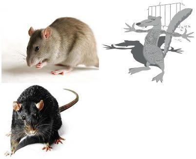 les 41 meilleures images du tableau education canine sur pinterest insectes les rats et rongeurs. Black Bedroom Furniture Sets. Home Design Ideas