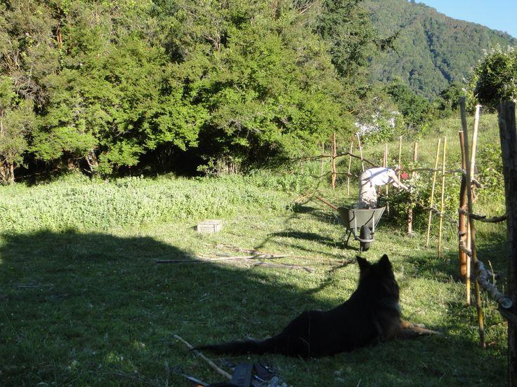 Creación del huerto bajo el cuidado de Pampa