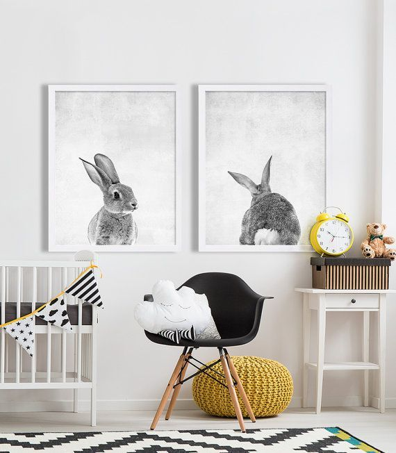 Photos lapins, décor noir/blanc/jaune