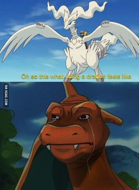 Dragons  ;-; go back to ash charizard                      ;-;-;-;-;-;