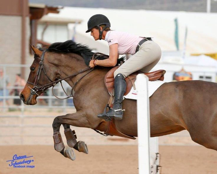 Scottsdale Arabian Horse Show News for Friday, February 19, 2016 :: Arabian Horse Association of Arizona