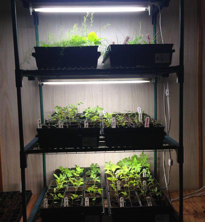 Grow Lights Indoor Greenhouses Indoor Greenhouse Indoor